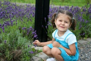 Lavender essential oil is popular in baby products