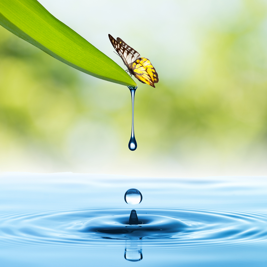 Water drop from green leaf with water splash