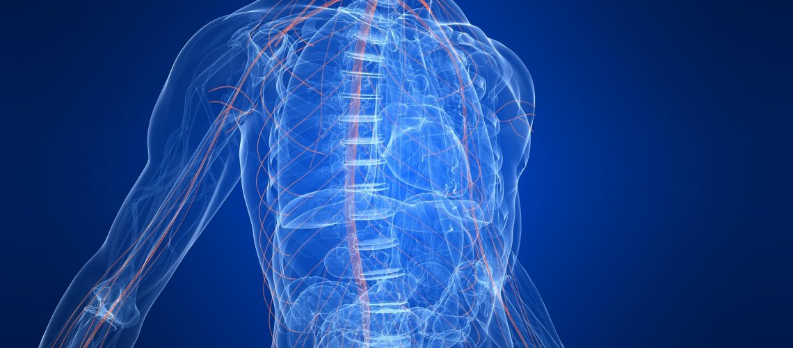 3d rendered anatomy illustration of a human body shape with highlighted nervous system